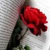 Sant Jordi serà una oportunitat per frenar el descens en vendes de llibres