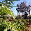 Otorgan el Premio Ali – bei  al compromiso con la calidad y la excelencia en el territorio al Consorci dels espais naturals del Delta del Llobregat