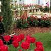 Inauguració de la 54a Exposició Nacional de Roses