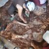 Troballa d'un elefant prehistòric a la Cova del Rinoceront de Castelldefels