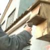 Noves instal·lacions de caixes niu a Viladecans, per afavorir la biodiversitat