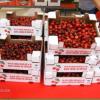 Un nou mercat de pagès al Baix Llobregat, cada diumenge al parc de Torreblanca a partir del proper 9 de juny