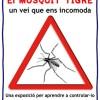 Davant el mosquit tigre, prevenció i informació