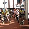 Torna per tercera vegada la Canicròs i Mitja Marató de Muntanya de l'Eramprunyà, entre Gavà i Begues