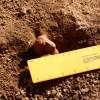 Noves troballes de restes romanes a Gavà