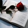 Per Sant Jordi, llibres del Baix Llobregat