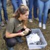 Alliberades 22 tortugues de rierol al Delta del Llobregat