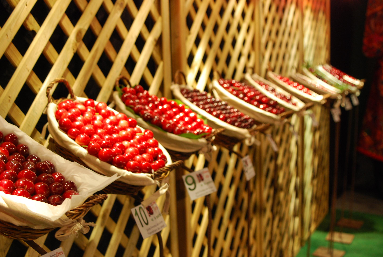 Se calcula que los agricultores locales venderán entre 1.500 y 2.000 kilos de cerezas