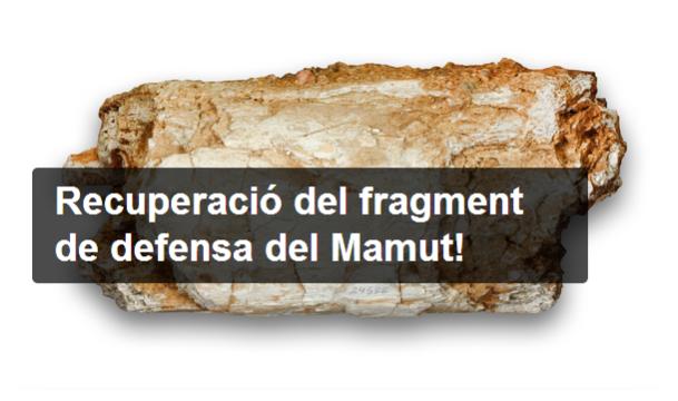fragmentmamut