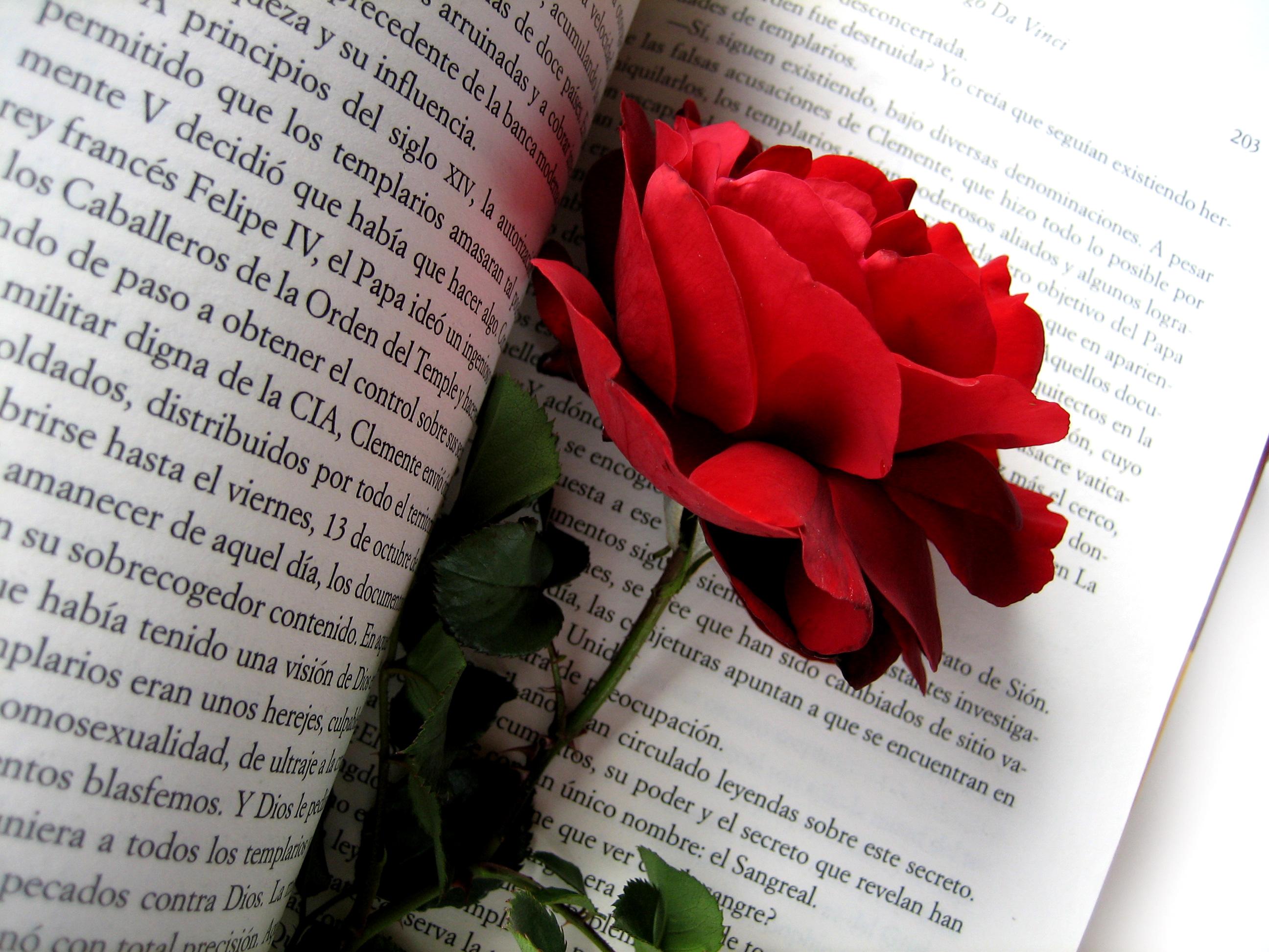 rosa-llibre sant jordi