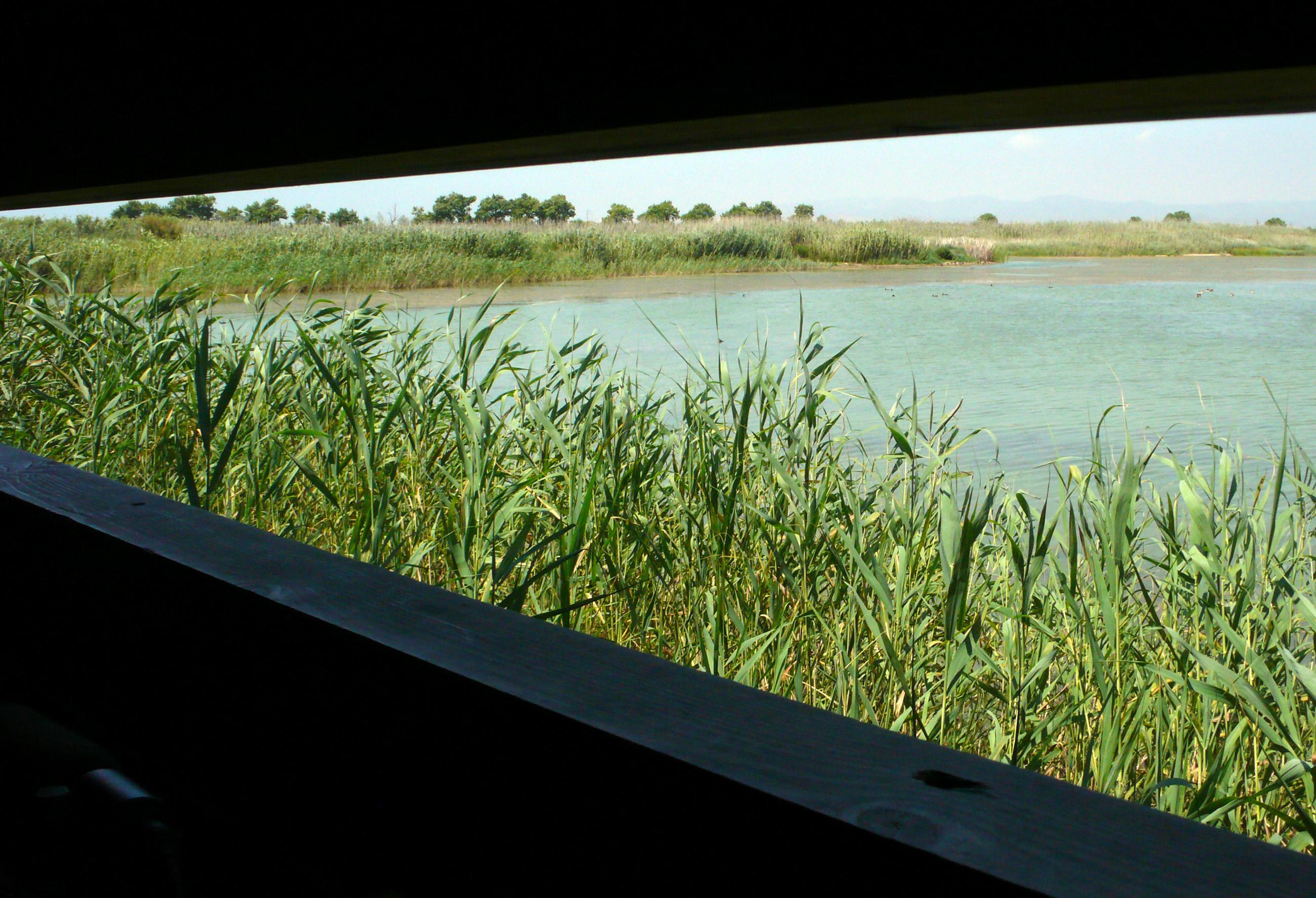 Cal Tet, un dels espais protegits del Delta del Llobregat.