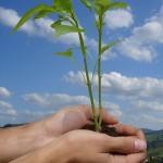 dia mundial medi ambient